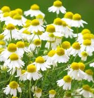 Sun and Surf Body Oil with Chamomile Essential Oil to help prevent skin cancers.