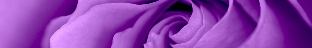 purple-rose1050x164.jpg