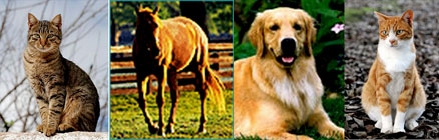 Pets-green-cats-dogs-horses.jpg